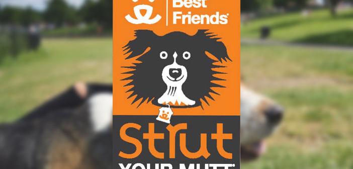 Strut your Mutt banner