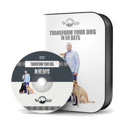 product photo of packaging for DVD dog training