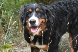 one outdoor dog hiking utah
