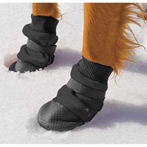 dog wearing Muttluks Dog Boots in the snow