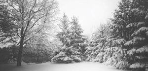 Black and white winter photo with trees
