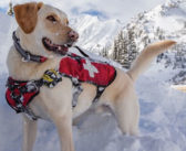 Backcountry Rescue Dogs