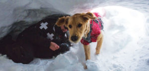 Rescue dog training in snow cave