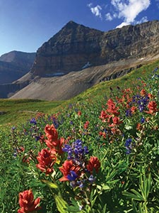 Mount Timpanogos and mountain wild flowers