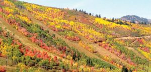 Fall Mountain Forest