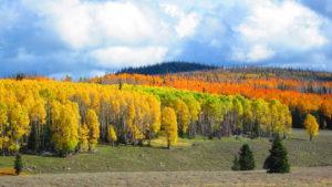 fall colors utah