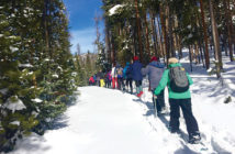 A group cross country skiing in the woods