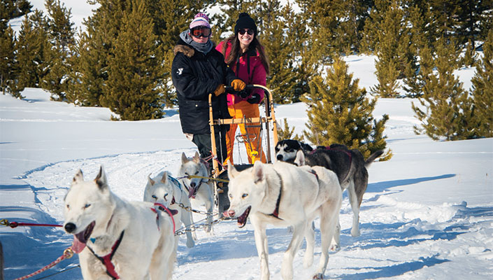 Two people riding a dog sled