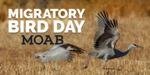 migratory bird day