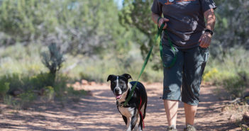 Volunteer walking a dog at Best Friends Animal Sanctuary