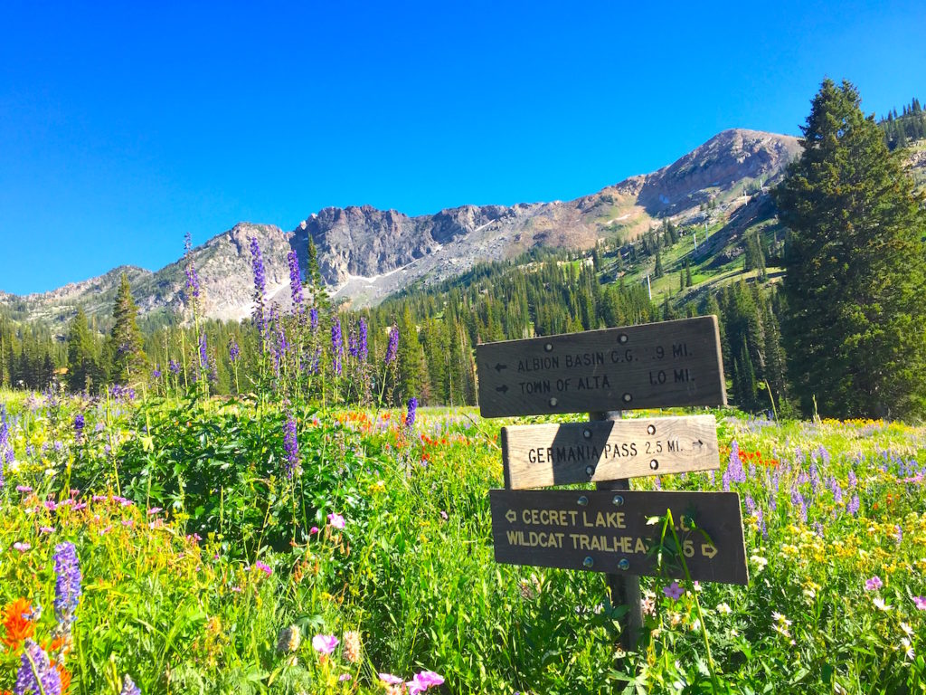 utah wildflower hikes
