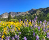 Utah's Best Wildflower Hiking & Summer Fun at Alta