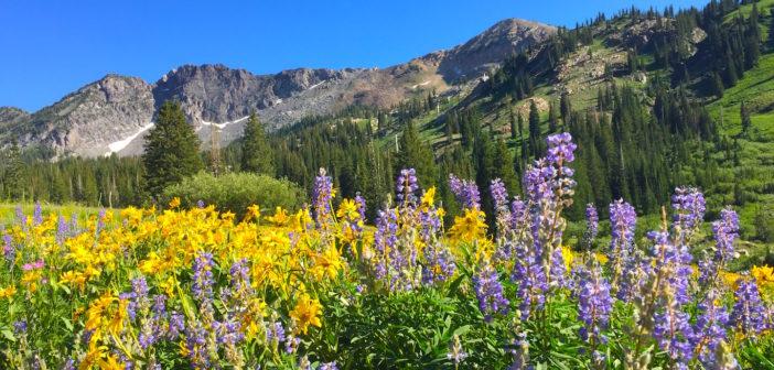 utah ski resort summer hiking at Alta