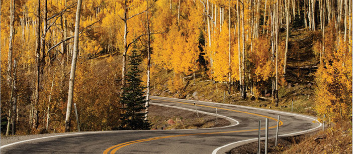 Fall woods in full color with winding road
