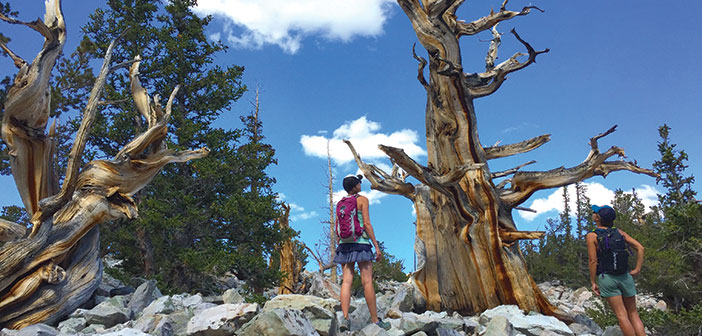 Undiscovered Fall Getaway Great Basin National Park Outdoor Sports Guide Magazine