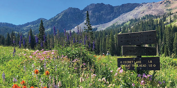 Mountain flowers at Albion Basin