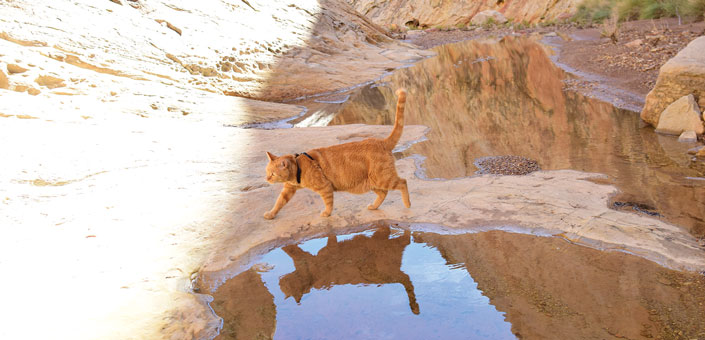 cat walking near puddle in the great outdoors