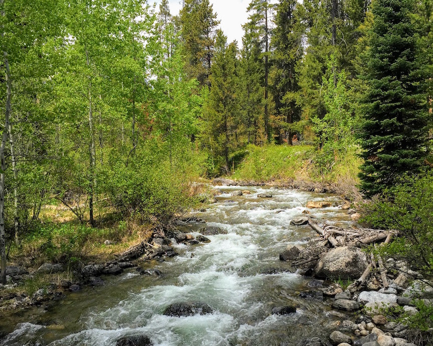 River in Jackson, Wyoming
